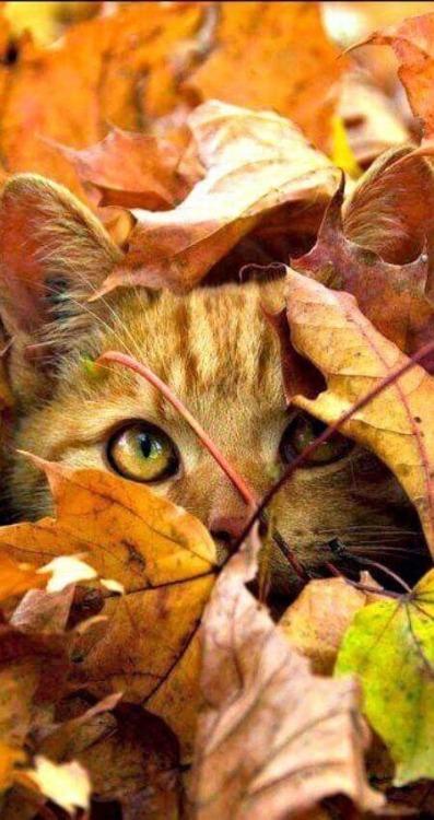 Fall Kitten Wallpaper Beautiful Animals On Tumblr