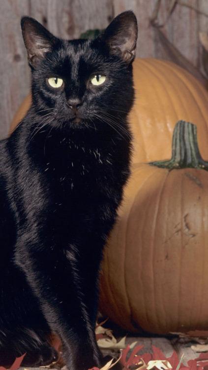 Wallpaper Cute Hipster Cat Gato Preto Tumblr
