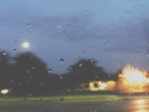 Rain Fall On Flowers Wallpaper Tumblr User Aesthetic Tumblr
