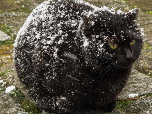 Medium Of Cat Has Dandruff