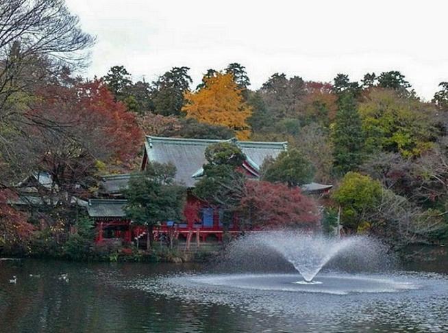 井の頭公園紅葉2