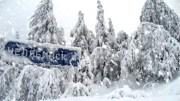 В Челябинске группа людей украла гирлянды с уличных елок