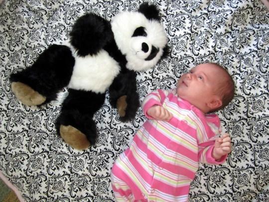 >The Panda Report: 3 Weeks