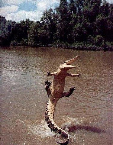 Excited Croc.jpg (JPEG Image, 460×590 pixels)