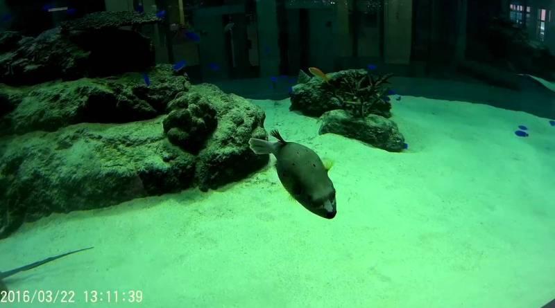 イオンモール沖縄ライカムの水槽