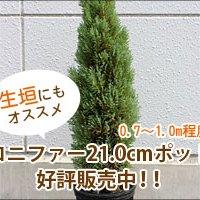 conifar-item02