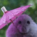 Rainy-Day-Essentials_p7a