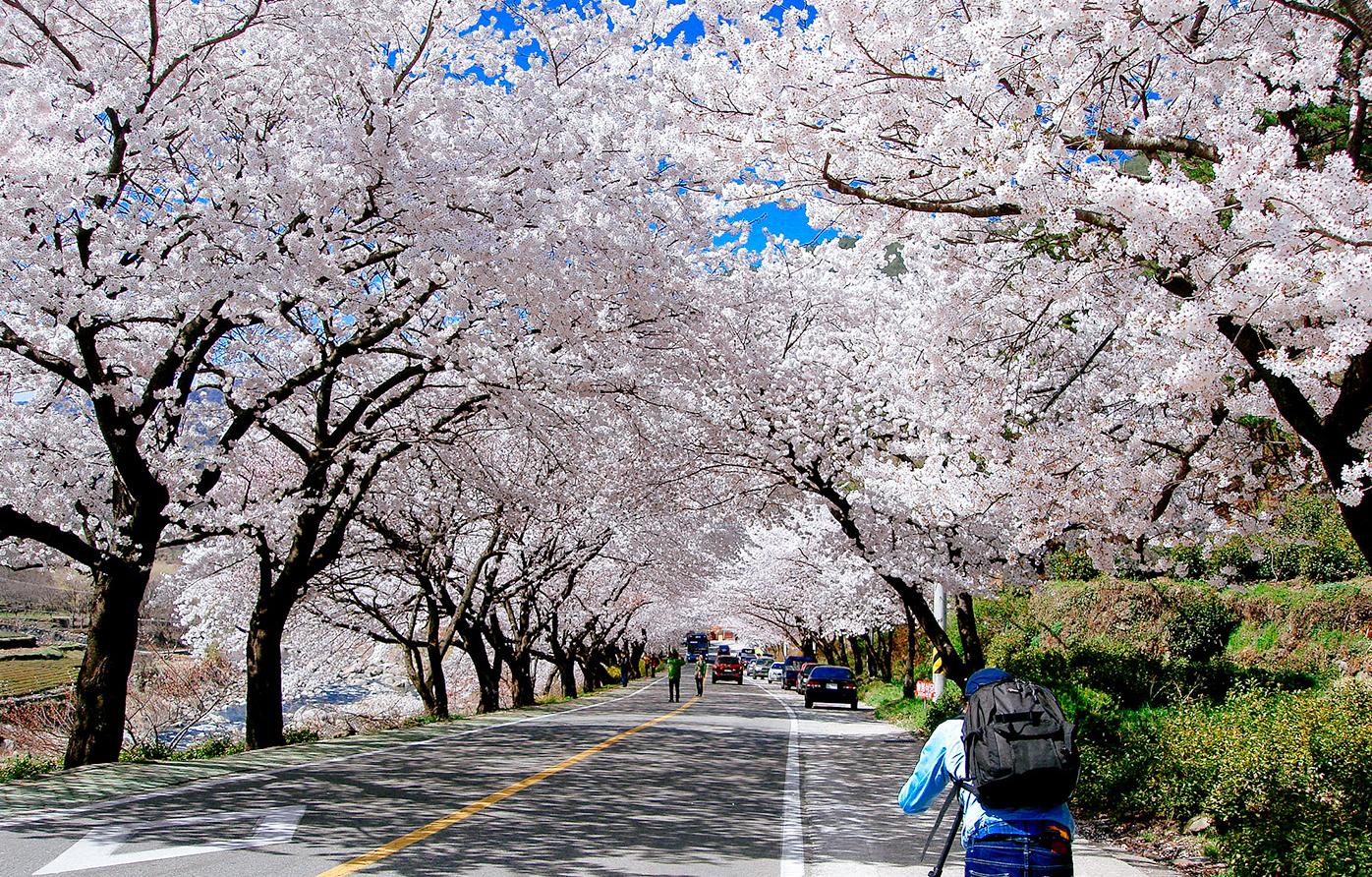 Late Fall Iphone Wallpaper Spring Weather In Korea 8 Shots Of Soju