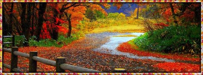 fall-autumn-leaves-falling-