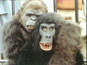 "Stuck in a gorilla costume with a horny gorilla, from the movie ""Trading Places."""
