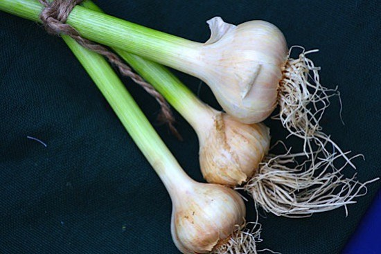 fresh-local-garlic.jpg