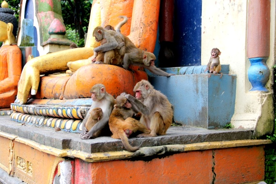 Monkeys taking over Vishnu