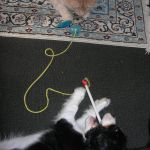 Sebastian & George playing on the floor