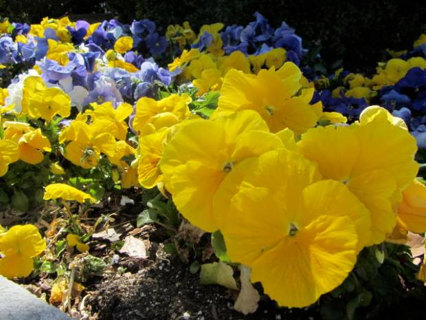 Spring time flowers