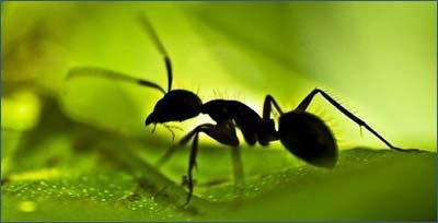 _sp-mravi