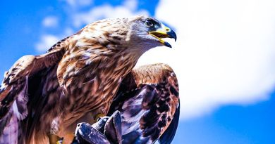 Raptors Now Protect Your Privacy from Rogue Drones