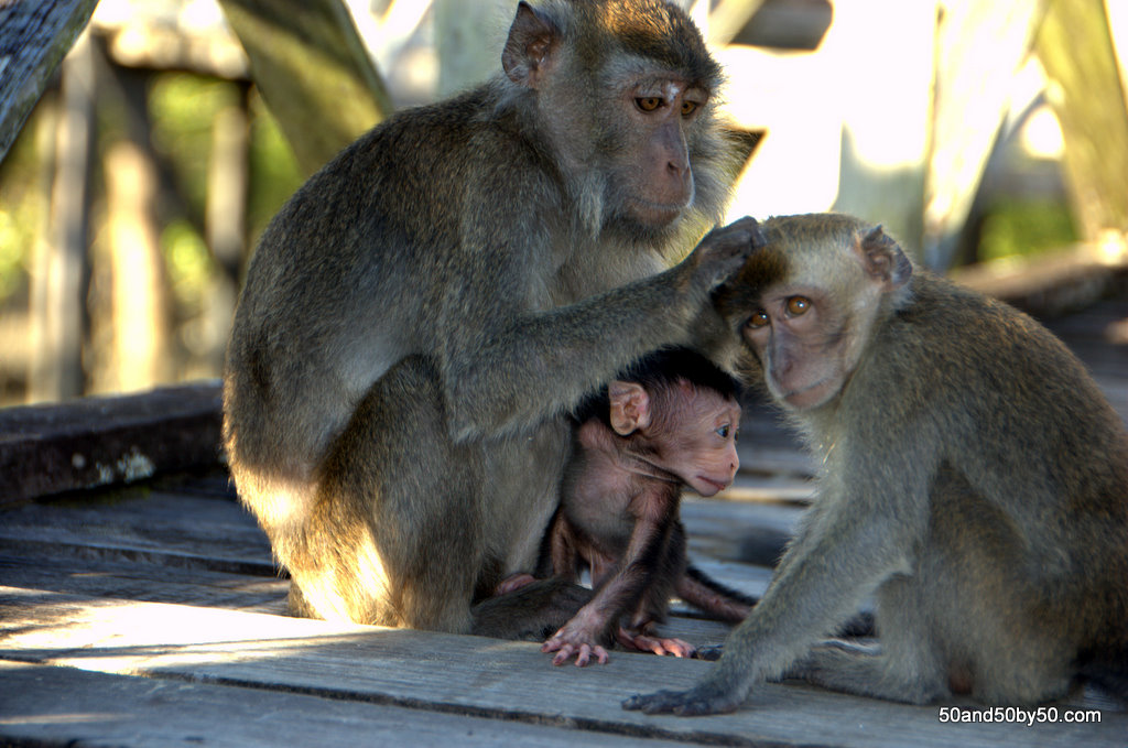 Baby Monkeys in Borneo!