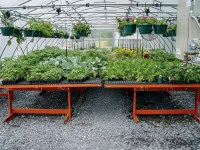 Greenhouse Tables Benches - Table Design Ideas