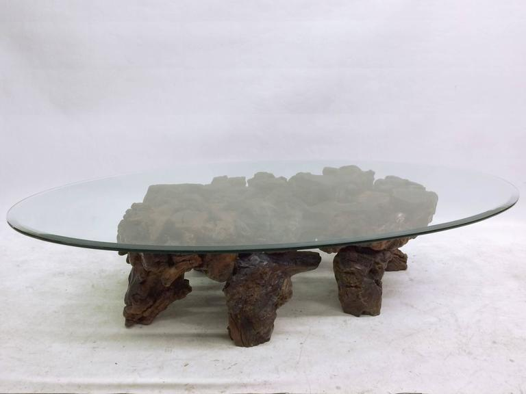 Large Californian Mid Century Burl Wood Coffee Table At