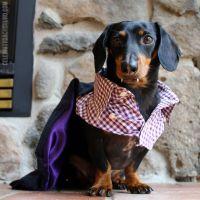 Crusoe the Halloween Favorite Picture   10 Amazing Pet ...