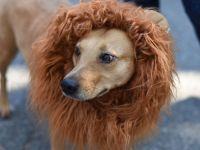 7 best costumes at annual Tompkins Square Halloween Dog ...