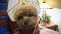 'Pope Dogs' and 'Pope Cats' Dressed in Papal Attire Are