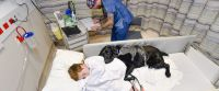 Loyal Dog Jumps on Hospital Bed to Comfort 9-Year-Old Boy ...