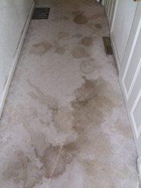 Heaven's Best Carpet Cleaning Greenville SC in Greenville ...
