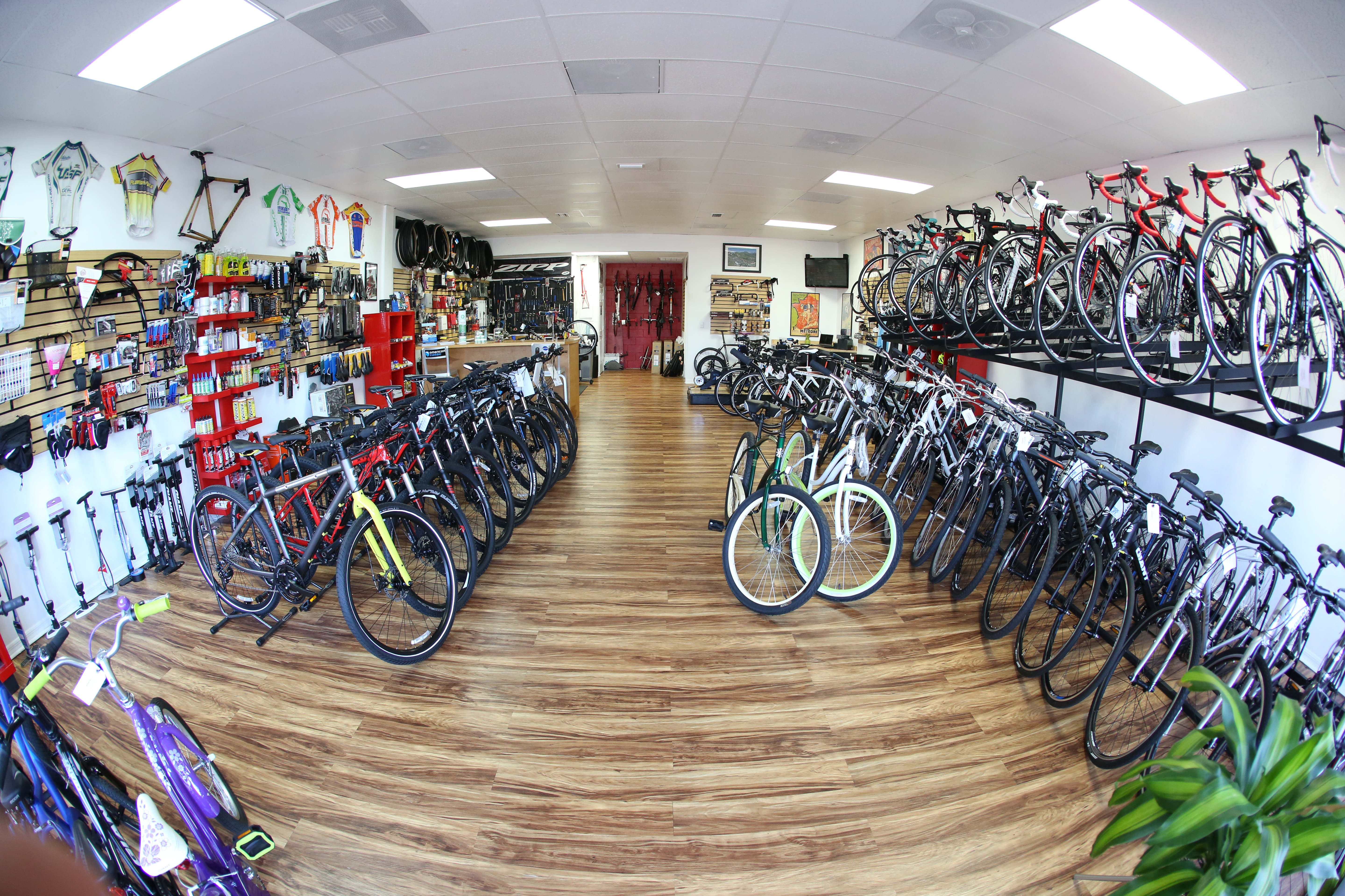 Bike Shop Tampa Fl Bikesport Bicycle Dealer Oldsmar Fl 34677