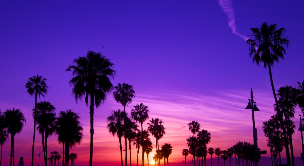 Cute Palm Tree Wallpaper La Might Relax Its 30 Year Old Beach Curfew 89 3 Kpcc
