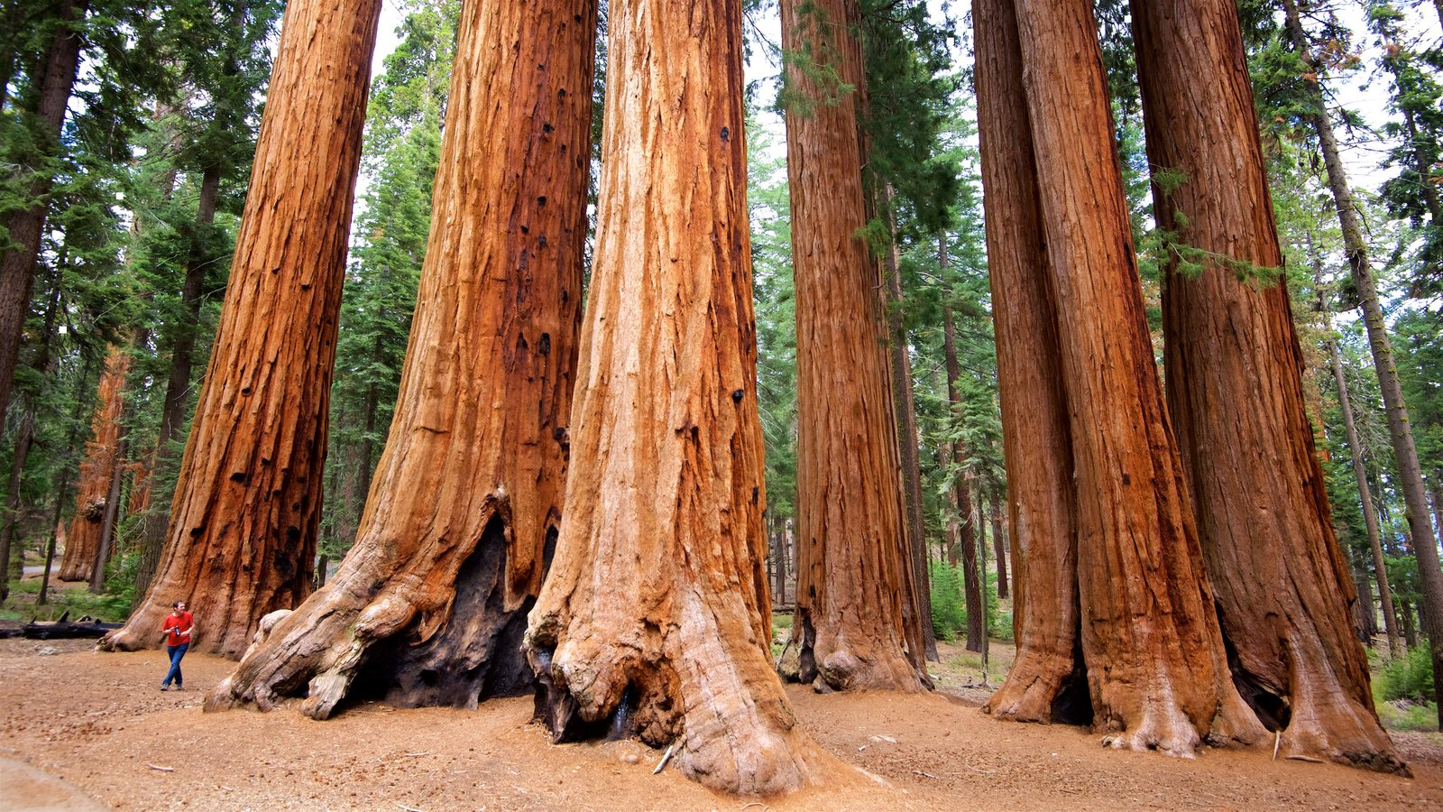 Kings Fall Wallpaper People Pictures View Images Of Sequoia National Park