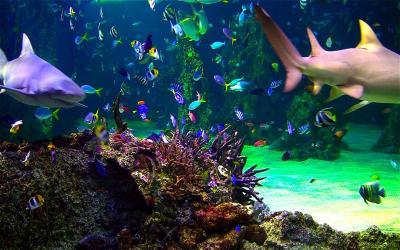 Aquarium Live HD+: ocean screensaver on the Mac App Store