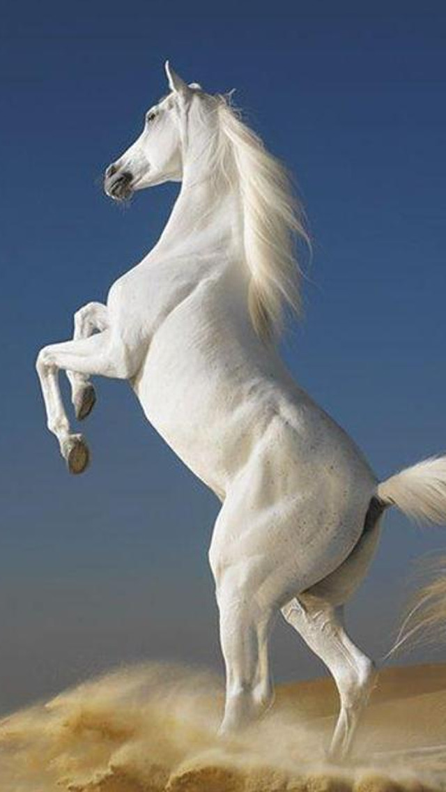 Horse Wallpapers HD - FREE Download Beautiful Collection of Running