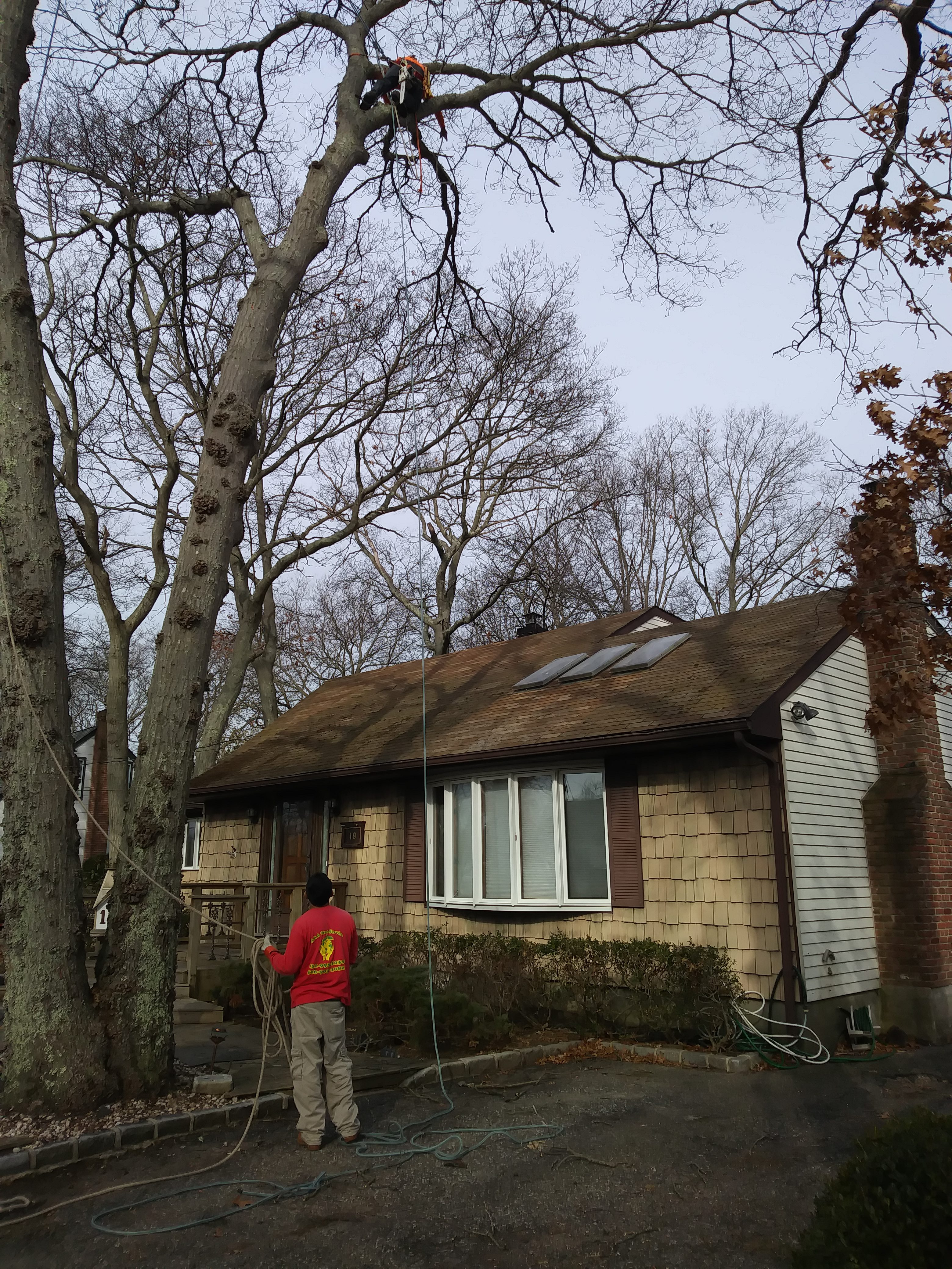 Tree Cutter Tree Cutter Near Me Aaa Tree Service Company Long Island Nyc