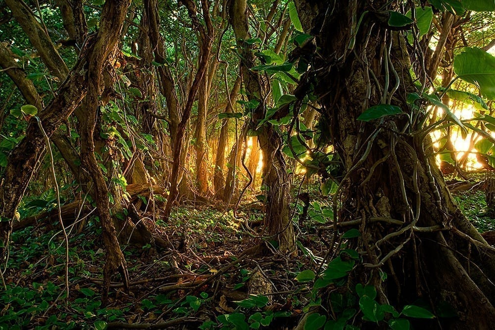 Ooty Hd Wallpapers Haena Jungle Light