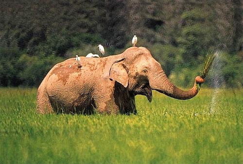 an elephant essay
