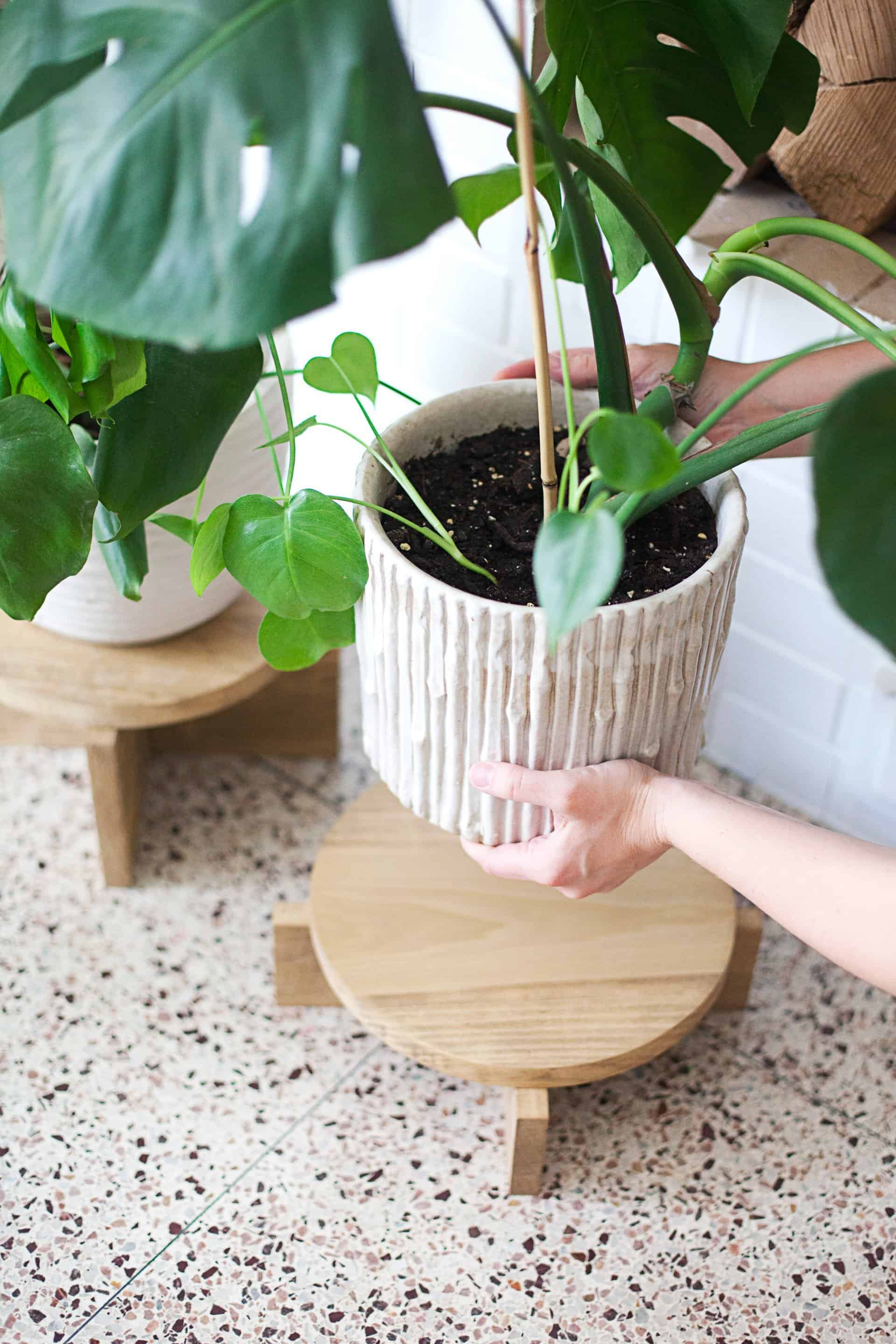 Plant Stand Modern Diy Modern Wood Plant Stands A Beautiful Mess