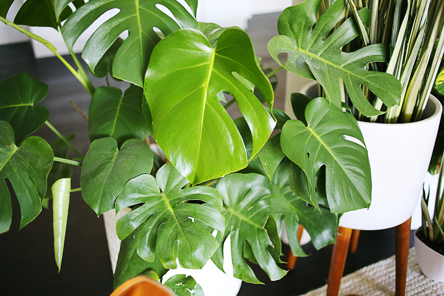 Easy Care Indoor Trees Five Easy To Care For Houseplants A Beautiful Mess