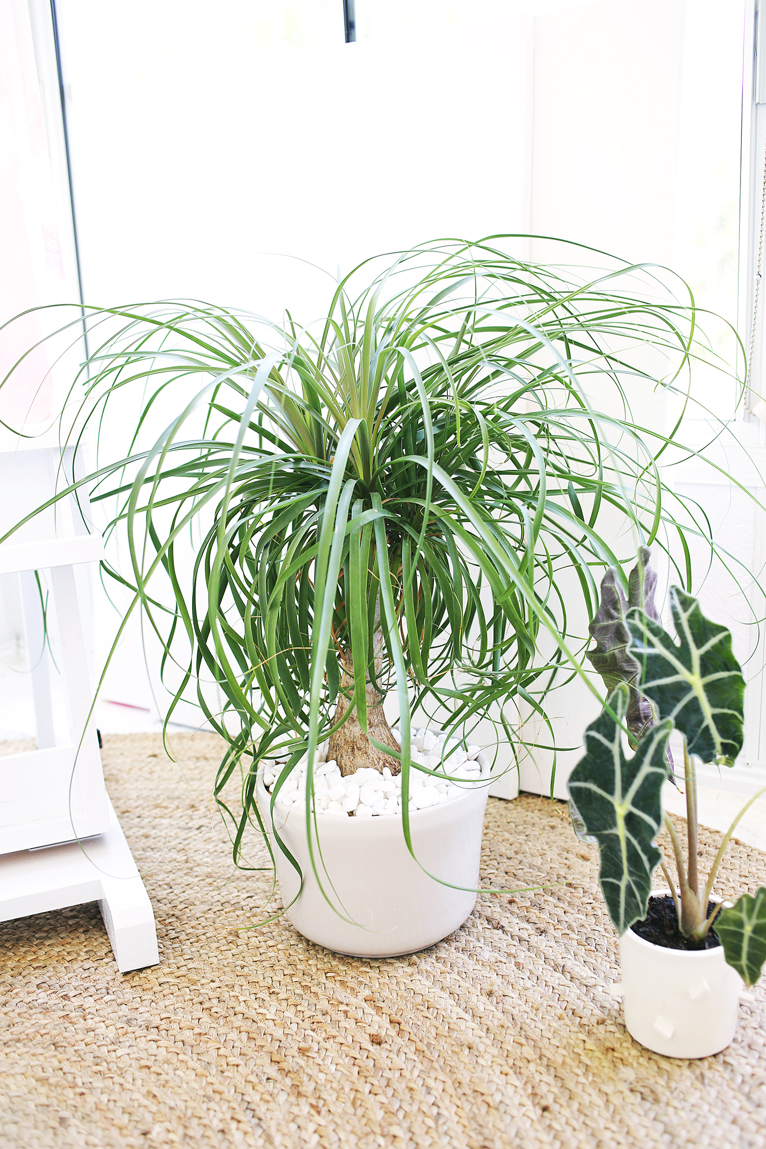 Easy To Care For Houseplants Five Easy To Care For Houseplants A Beautiful Mess