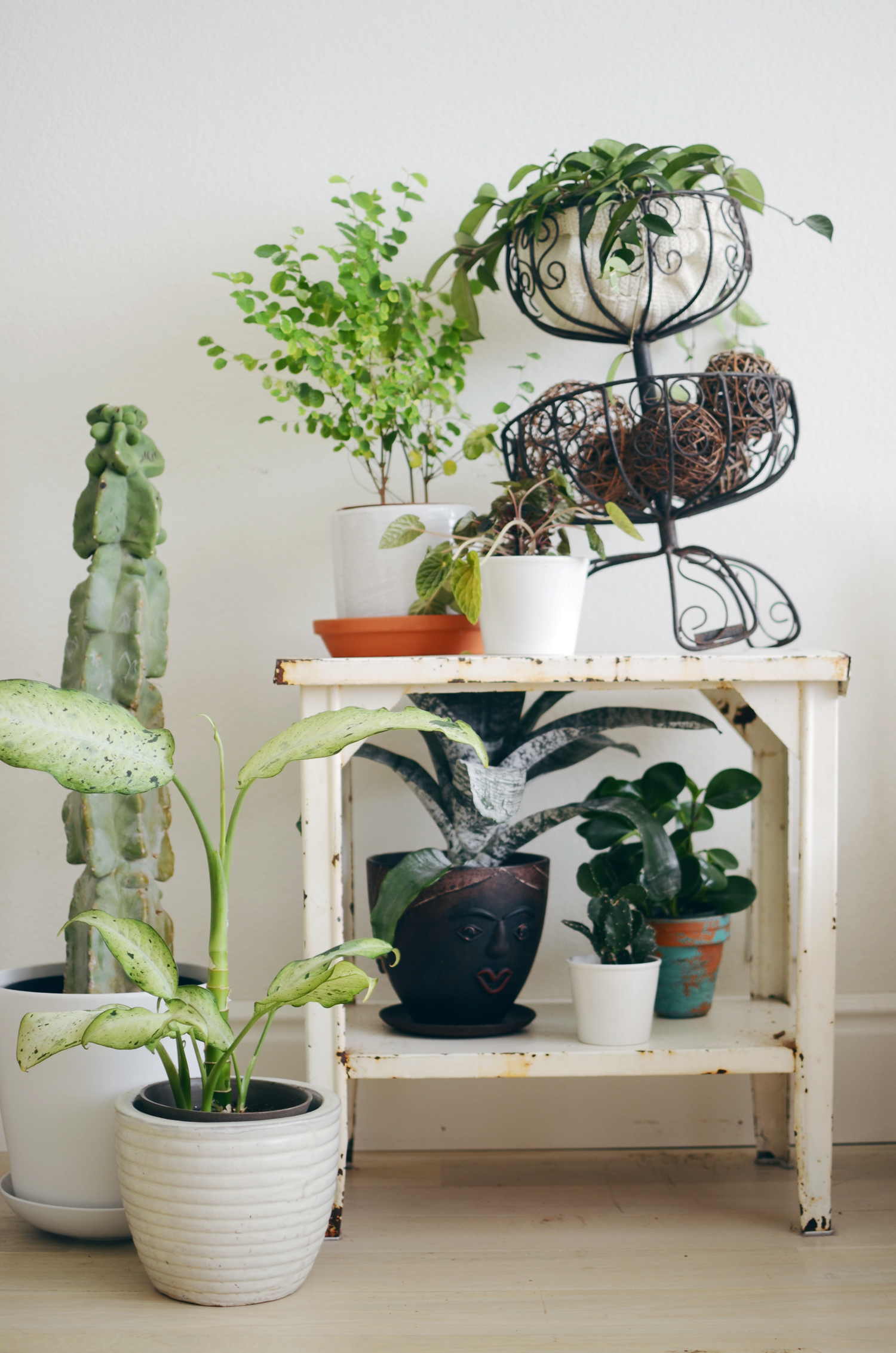 Indoor Plants For Home Tips For Keeping Indoor Plants Alive A Beautiful Mess