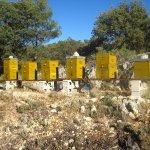 Seis nuevas colonias en Mas de Prats