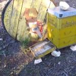 En la parte de delante, donde sale el grueso de la pecorea solo dejamos un agujero, una piquera.