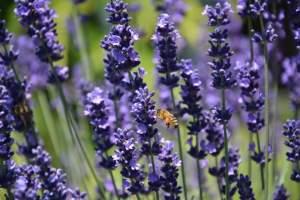 odores de flores