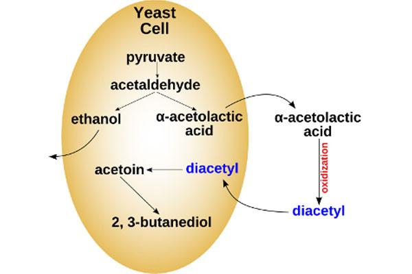 yeast5