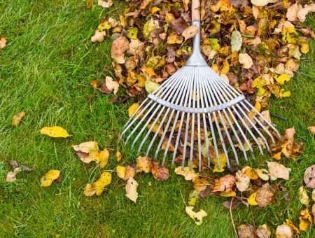 Cuidar el jardín en otoño: trucos y consejos