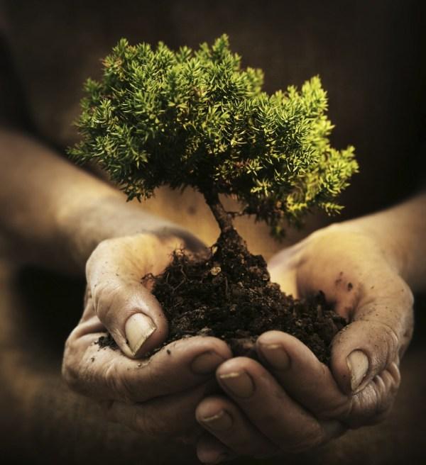 Growing Tree - training course - Czech Republic - abroadship.org