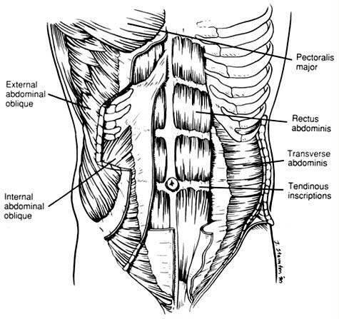 lower abdominal skin diagram