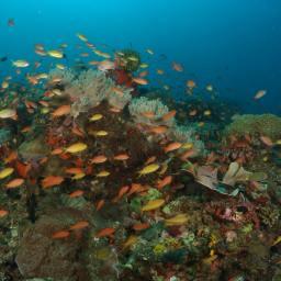 Sombrero Island Underwater