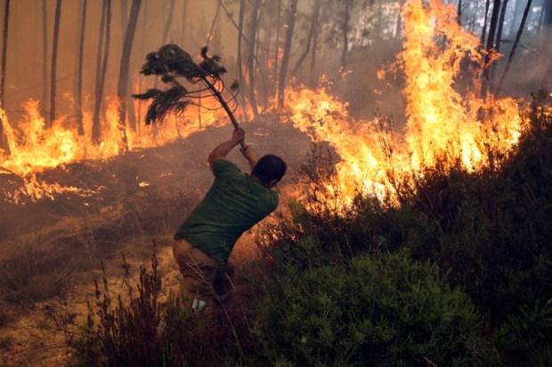 رجل إطفاء يحاول إخماد جزء من النيران الضخمة المندلعة في الغابات