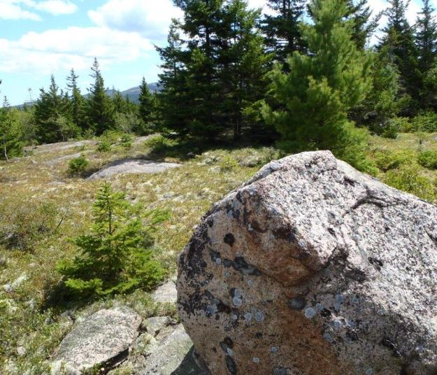 Youngs Mountain, Acadia National Park
